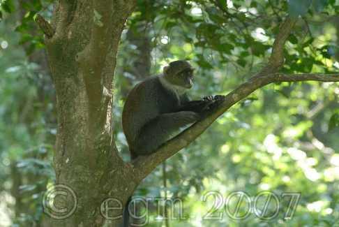 Monkey at park