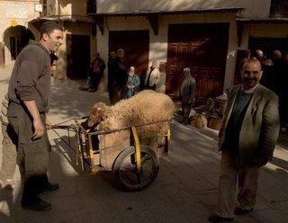 Sheep in Carossa