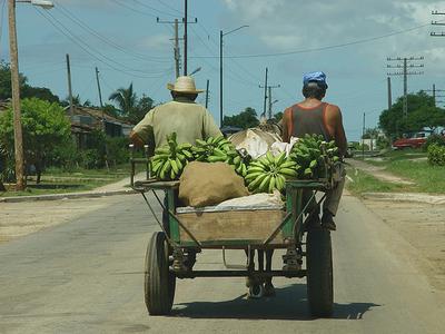 Bananas in Cuba