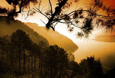 guateforest.jpg