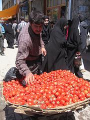 Tomatoes in Hamadan
