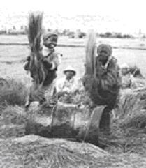 malagasy farmers