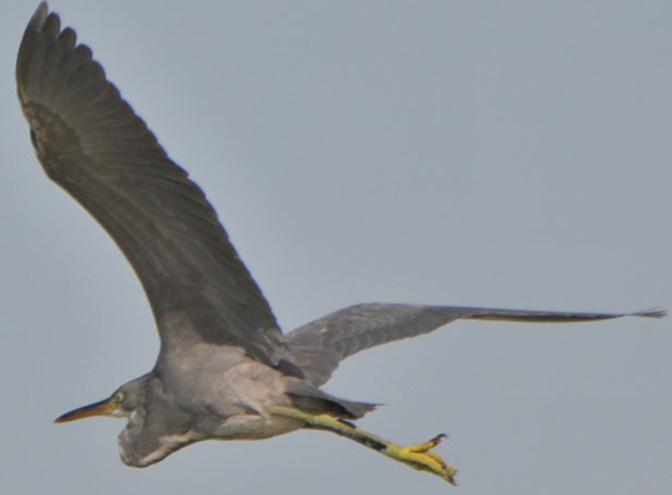 Uccello migratore, dal blog Bahrain Obs