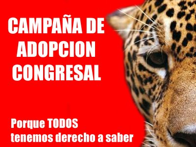Campaña adopta un congresista de Perú