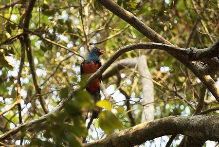 Birdwatching in Guatemala