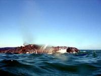malindi-humpback-whale-sml.jpg