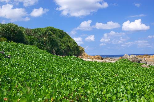 Amami Island. Flicjr id: Takayukix