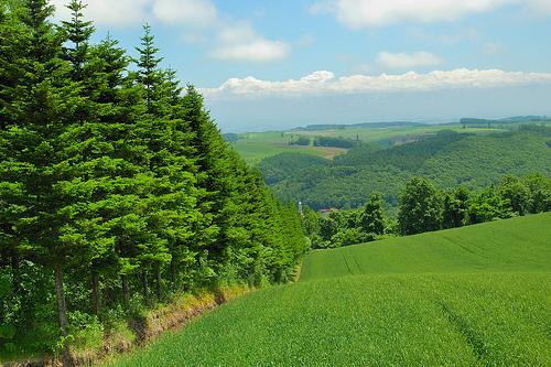 Biei, Hokkaido. Flickr id: Taro416