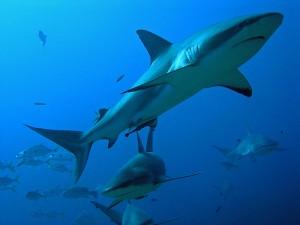 Foto di squali