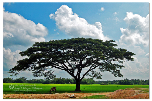 Nature in Bangladesh; Durgapur, Netrokona, By Ariful Haque Bhuiyan (http://www.flickr.com/photos/arifbd111/3401682813/), used under a Creative Commons license