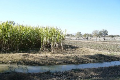 Sugar Cane Production In Pakistan. Image by Flickr User Omer Wazir
