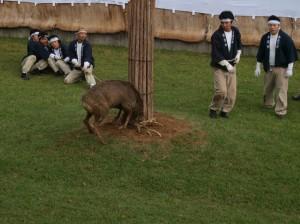 鹿の角きり (Deer antler-cutting ritual)