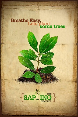 The Sapling Project. Image by Fotuya