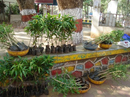 The saplings are loaded and ready to share. Image by Bombay Lives