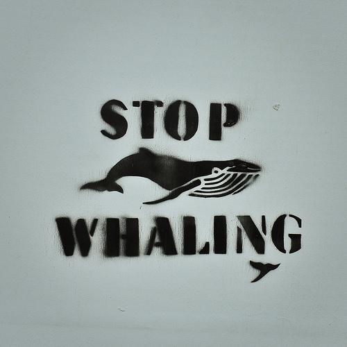 Stop Whaling. By Flickr id: alisonlongrigg.