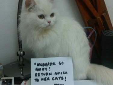 My cat Tiny appeals to Mubarak to step down