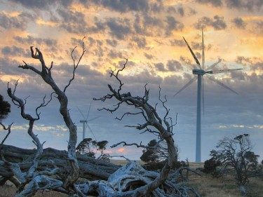 Millicent wind farm, South Australia at sunrise. Image by Flickr user Bush Philosopher - Dave Clarke (CC BY-NC-ND 2.0).