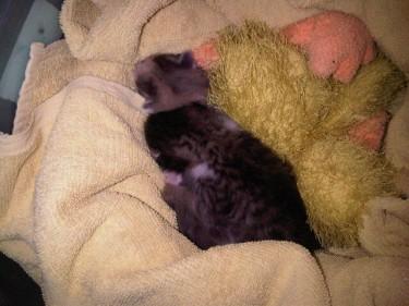 Revolutionary kittens. Image by @RaghdaButros.