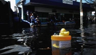Überschwemmungsente