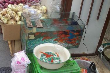 Nowruz fish for sale in Tehran