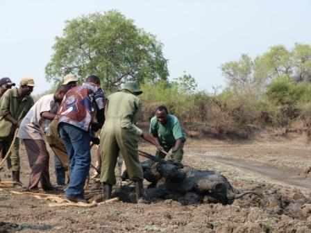 Team trying to rescue the elephants. Image by Abraham Banda, Norman Carr Safaris