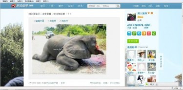 Taiwan artist Chan Chien-chou uploaded on Sina Weibo a picture of an injured elephant lying on the floor after its ivory was removed by poachers. Image source: Ronald Yick.