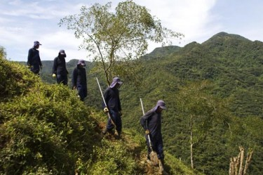 Destroying coca plants in the lush mountains in Medellin, Colombia. Photo by Viewpress. Copyright Demotix (05/30/2012)