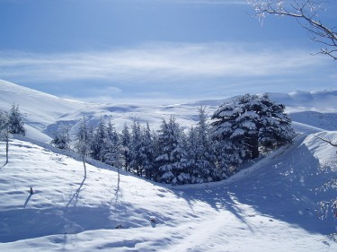 Cedar trees in the snow, Bcharre, Lebanon. Image by Flickr user Leandroid (CC BY-NC 2.0).