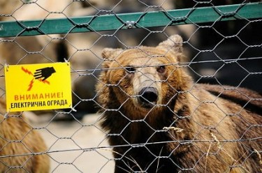 A bear in Skopje Zoo. Photo by Vasil Buraliev, used with permission.