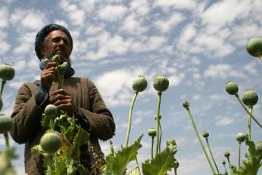 Farmer in poppy field