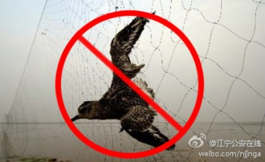 Say No to Wild Bird Consumption. A poster uploaded by Jiangning police online on Weibo.