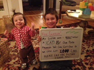 Facebook campaign to adopt a cat