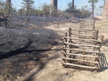 baobás queimados