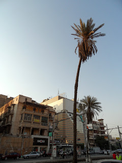 An old palm tree on Al Ahram Street