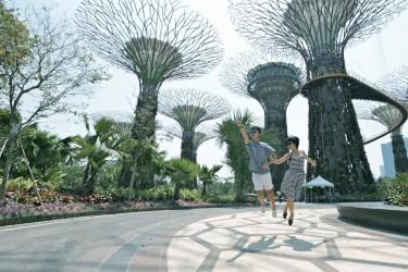 levitation trees