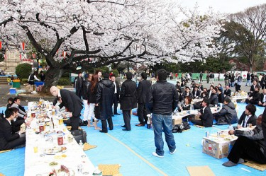 Company's hanami party at Ueno Park, Tokyo Photo by Benson (CC BY-ND 2.0)