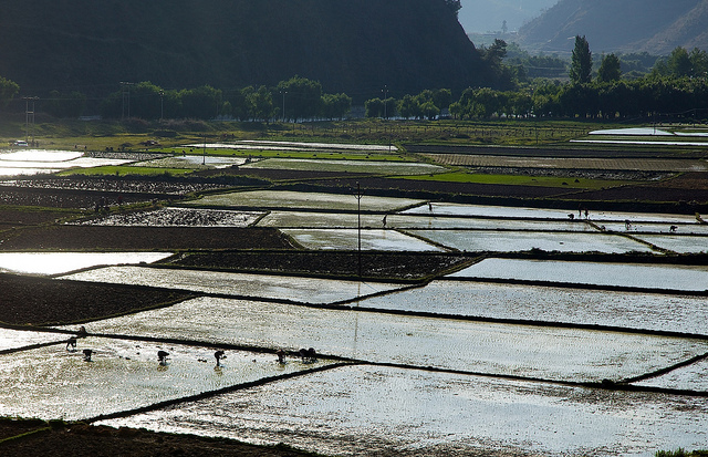 Agriculture in Bhutan contributes to 35.9% of GDP of the nation. Image from Flickr by Michael Foley. CC BY-NC-ND