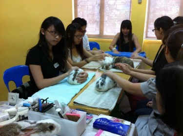 A rabbit grooming workshop conducted by the Society for the Prevention of Cruelty to Animals