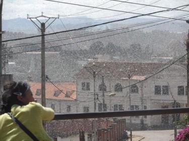 Locust invasion in down town Fianaratsoa, Madagascar