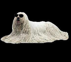 blind komondor