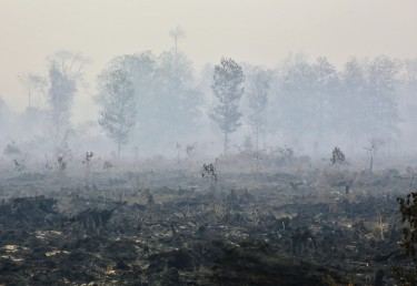 A burning forest in Riau, Indonesia. Photo by Virna Puspa Setyorini, Copyright @Demotix (6/20/2013)