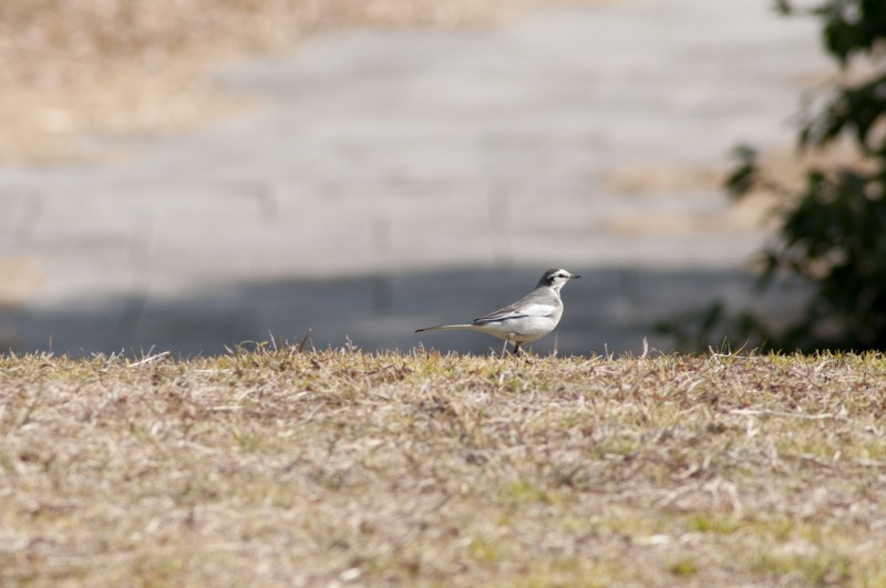 Photo of Kasai Rinkai Park by flickr user Yuichi Sakuraba