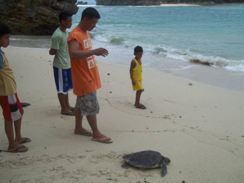 Escorting the sea turtle back to the sea. Photo by Ma Cecilia Mendioro Gendrano