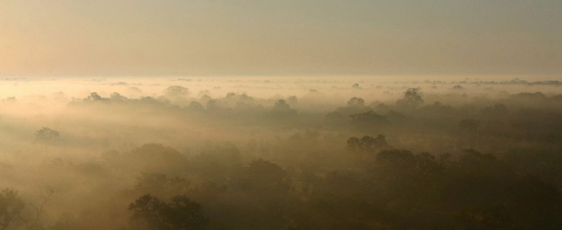 Morning mist in Gorongosa. Photo by Bart Wursten on Flickr (CC BY-NC-SA 2.0)