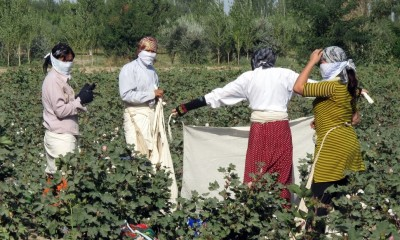 "Uzbekistan has also been accused of routinely using 'slave labor' to harvest cotton.  ""Cotton Pickers"" by peretzp, September 20, 2009 (CC BY-SA 2.0)."