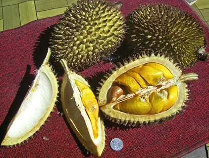 Image of Durian. Image courtesy Wikimedia Commons. CC BY-SA 3.0