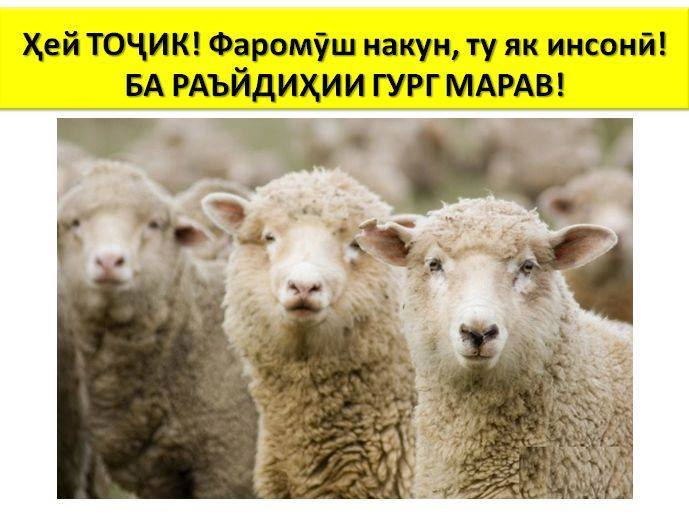 """Hey, Tajik! Don't forget that you are a human being! Do not go to vote for a wolf"". Image circulated anonymously on ""Platforma""."