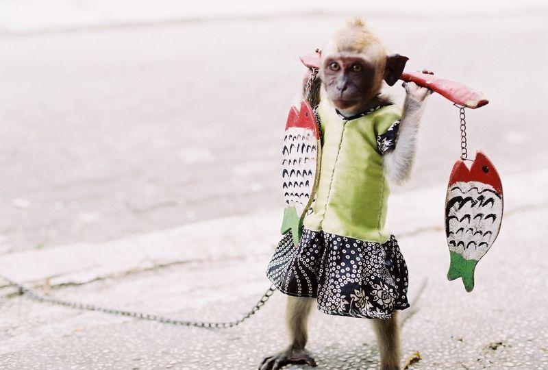 'Masked Monkey' in Jakarta. Photo from Flickr of rizky-kitsuneramen (CC License)