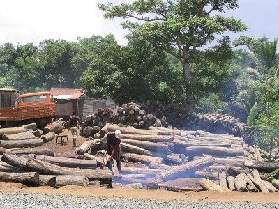 Illegally logged rosewood from Masoala and Marojejy in Antalaha, Madagascar via wikipedia CC-BY-2.0