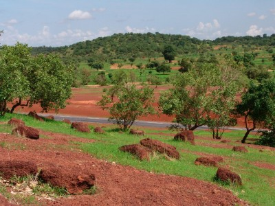 Forest in the Kayes Region in Mali CC-NC-2.0